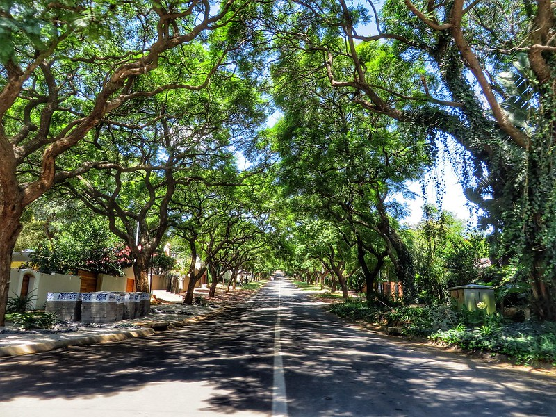 A tree lined street in Pretoria