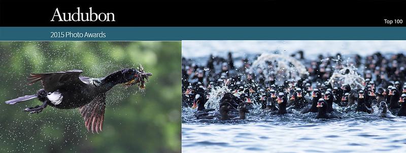Audubon Photo Awards 2015 - Top 100