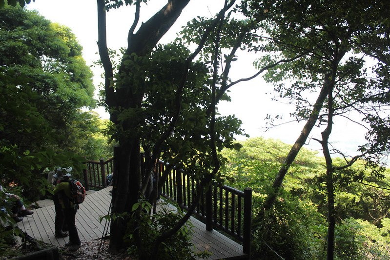 20140531-開聞岳-0281.jpg