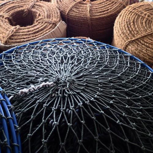 ホヤ漁で使うロープ。