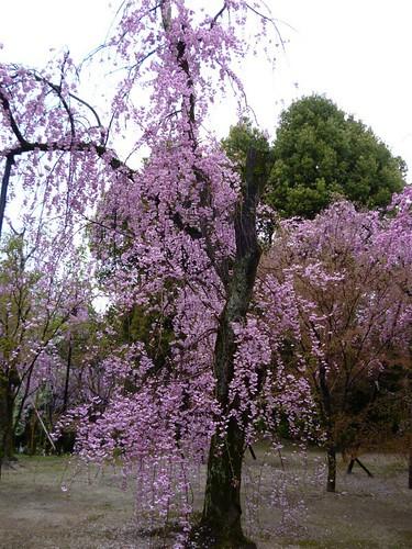 heinan jingu shrine garden