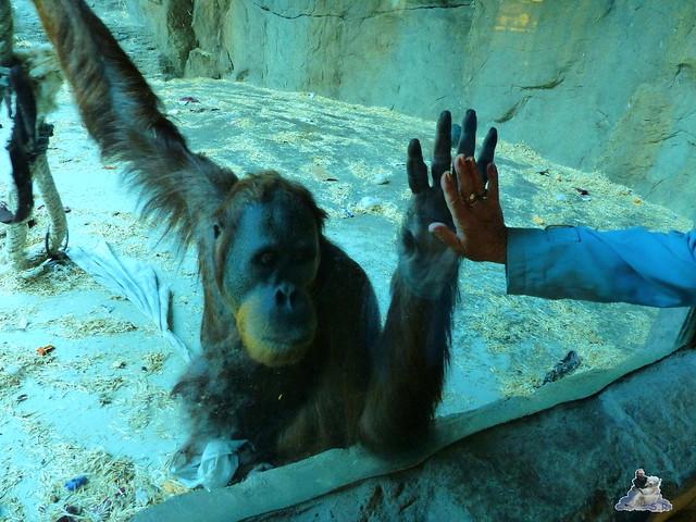 Zoo Bratislava 18.04.2015 61