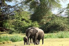 0648 Elephants - Amboseli National Park - Kenya 07-08-2016