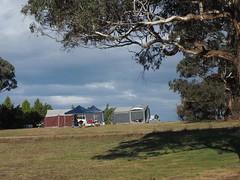 Macquarie Woods