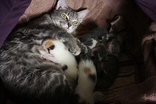 Eve and kittens