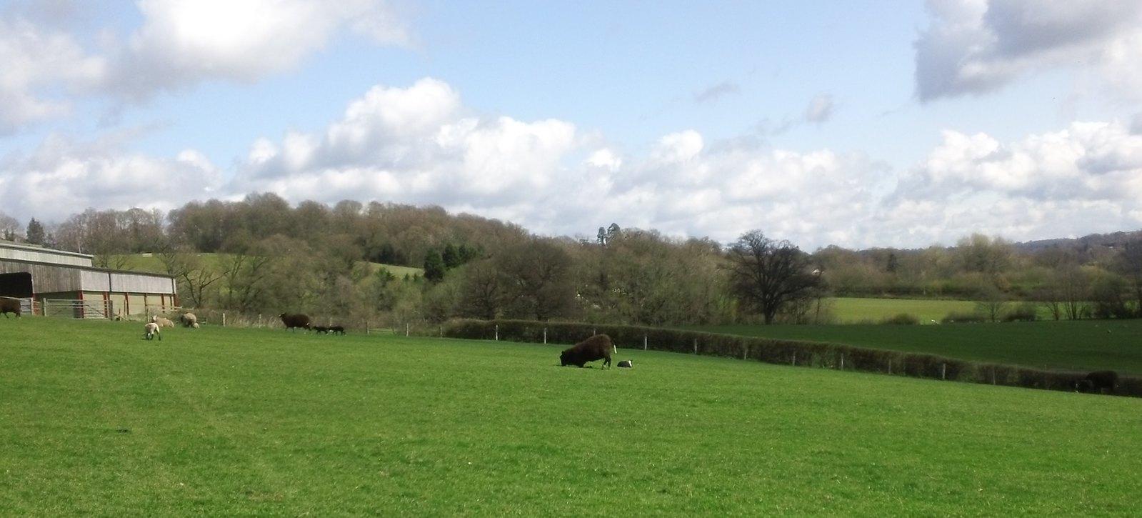 Yes, it's a kneeling black sheep