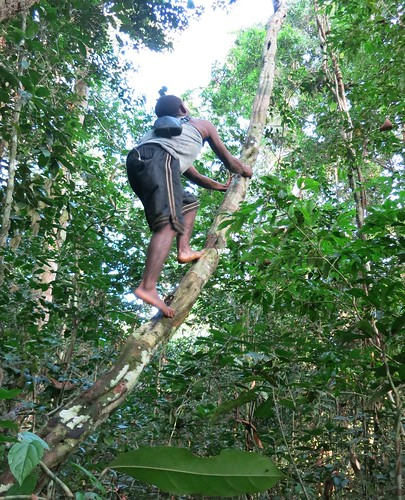 Climbiing into Lomami canopy 2