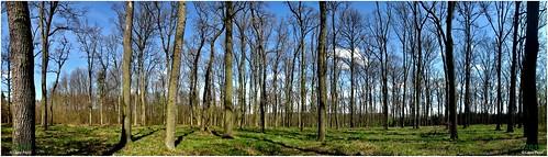 hungary tó erdő kaposvár fák deseda somogymegye parkerdő