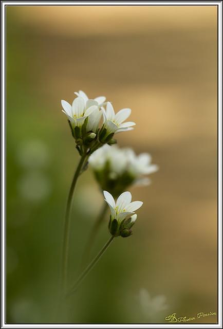 Fleurs des bois 01