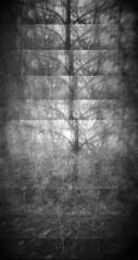 Tree No. 1  [Explore 4/18/2015]