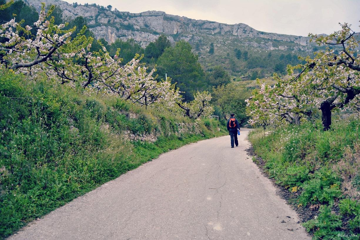 Valle de la Gallinera_Cerezos en Flor (2)