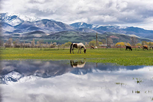 horses utah cows explore i84 wasatchrange morgancounty wasatchmountains trappersloop mountaingreen morganvalley pixelmama westtoeastcoastroadtrip