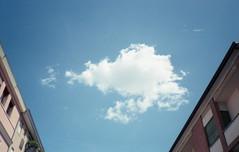 Uno scorfano nuota nel cielo