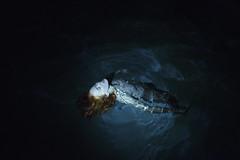 Chrissie (Medusa)