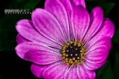 Flower Shot @ Garden by the Bay