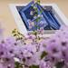 Purple garden by cernicb