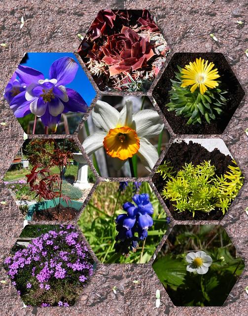 Garden Colour 1