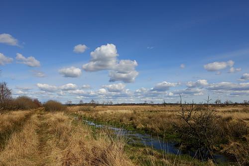 Jardelund Moor