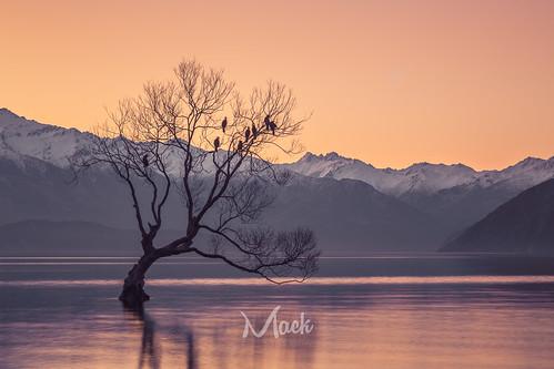 newzealand otago wanaka