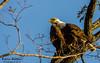 Watchig over the nest....