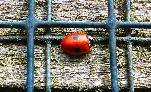 DSCN4435 2 spot Ladybird