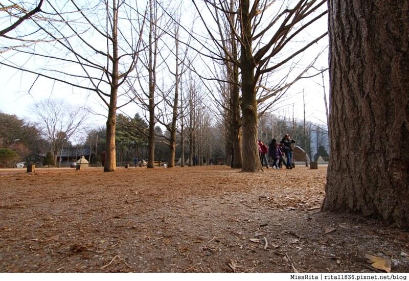 《遊記》韓國江原道‧南怡島남이섬(Nami Island),走進〈冬季戀歌〉浪漫場景,欣賞筆直的銀杏樹和杉木林道♥