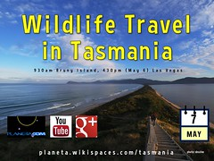 Wildlife Travel in Tasmania Hangout @EchidnaW