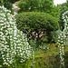 EL CELINDO --- Planta del mes