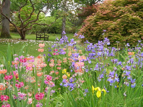 Irises and candelabra primulas © Nigel Philpott