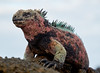 Spiky Surveyor by ggppix