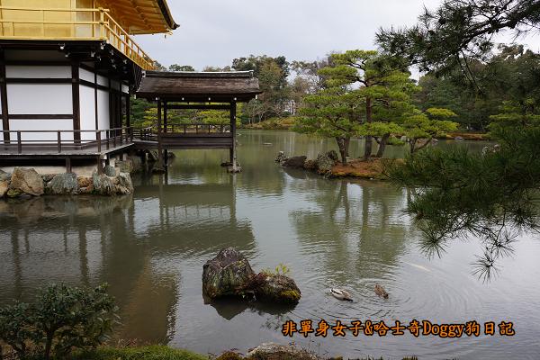 日本京都金閣寺16