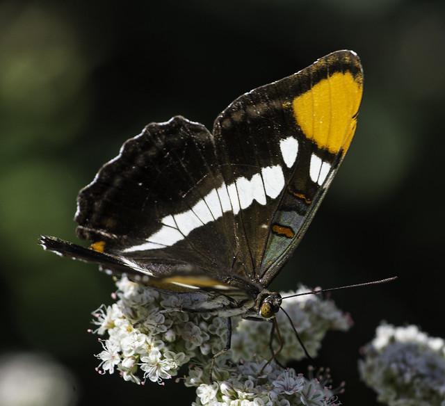 Butterfly At San Diego Botanic Garden Flickr Photo