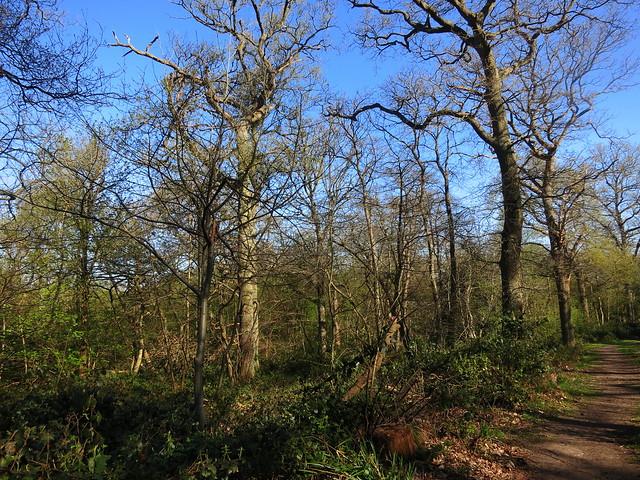 Oxhey Woods 16