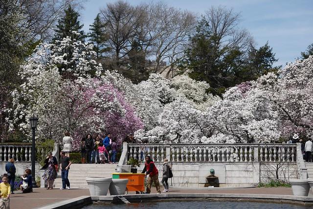 日, 2015-04-19 13:49 - Brooklyn Botanic Garden