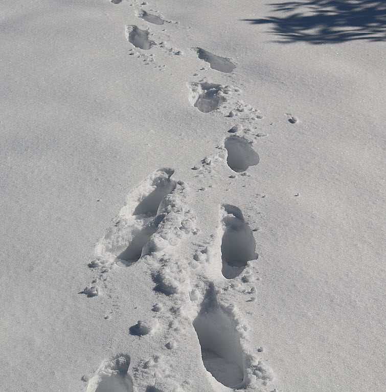 footprints in snow Steps To Starting Over New And Fresh 2