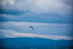 Seagull in Zürich
