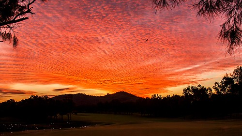 trees sunset red golden hills golfcourse queensland corellas windaroo greenfairway sunsetredandgold