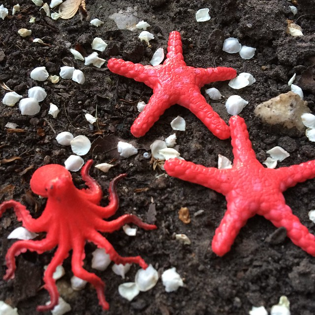 These three plastic guys I found out in the world, two starfish and one octopus, remind me that sometimes going on the journey leads you to fun discoveries.