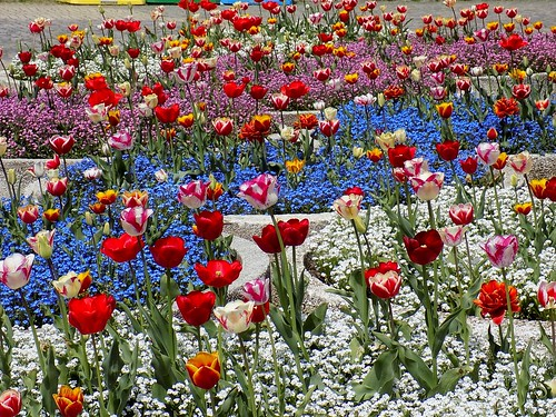 southpark tulip юженпарк nikoncoolpixl330 улнишава