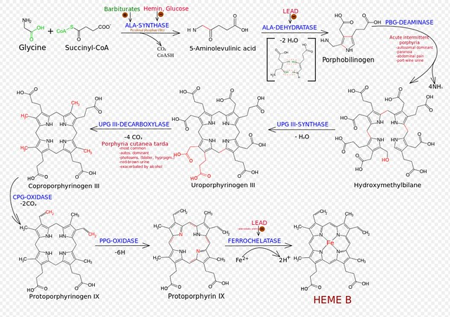 THE AMAZING HEMOGLOBIN MOLECULE 17241375931_d8cae3720f_z