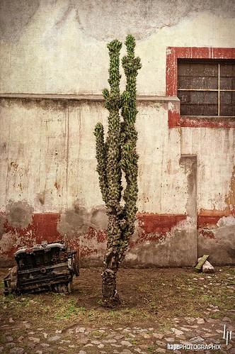 Motor con cactus