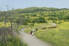 Tush horses in Vashlovani