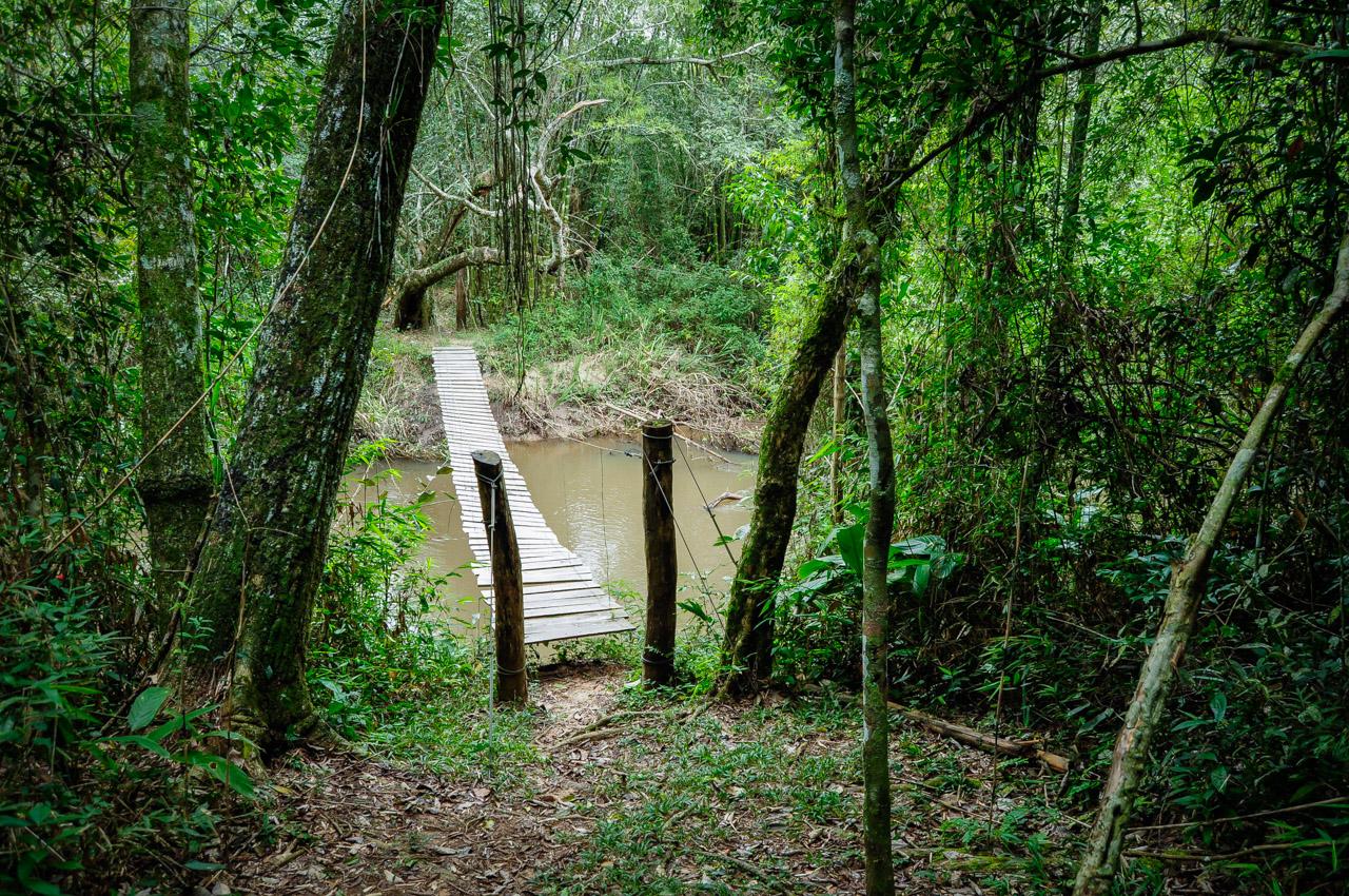 Un puente colgante se extiende a lo largo de un pequeño afluente del río Jejuí, durante el paseo guiado los funcionarios de la reserva van explicando que en dicho río se realiza paseos en canoas y hasta cultivo de camarones de río. (Elton Núñez)
