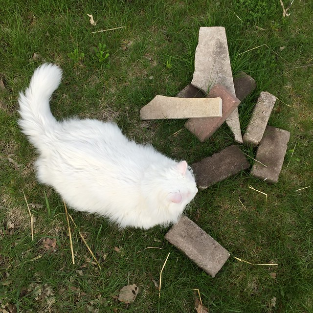 Cat considering the building of a henge.