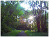 Leif Erickson Trail in Forest Park on a fine Memorial Day evening.
