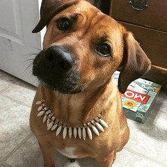 Pretty as a #princess #dogsofinstagram #mutt #necklace #pup
