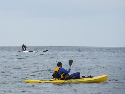 Puerto Madryn: une belle nageoire de baleine