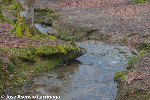 Hayedo de Otzarreta Parque Natural de Gorbeia 2015 #DePaseoConLarri #Flickr -058