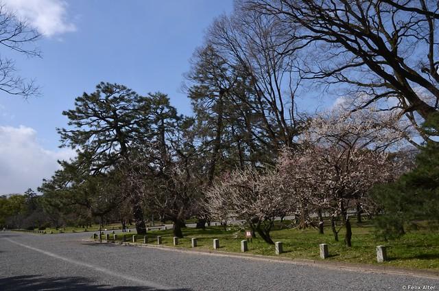Mehr Kirschbäume