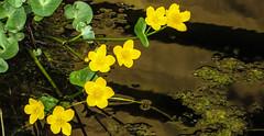 Flower Arrangement over a pond